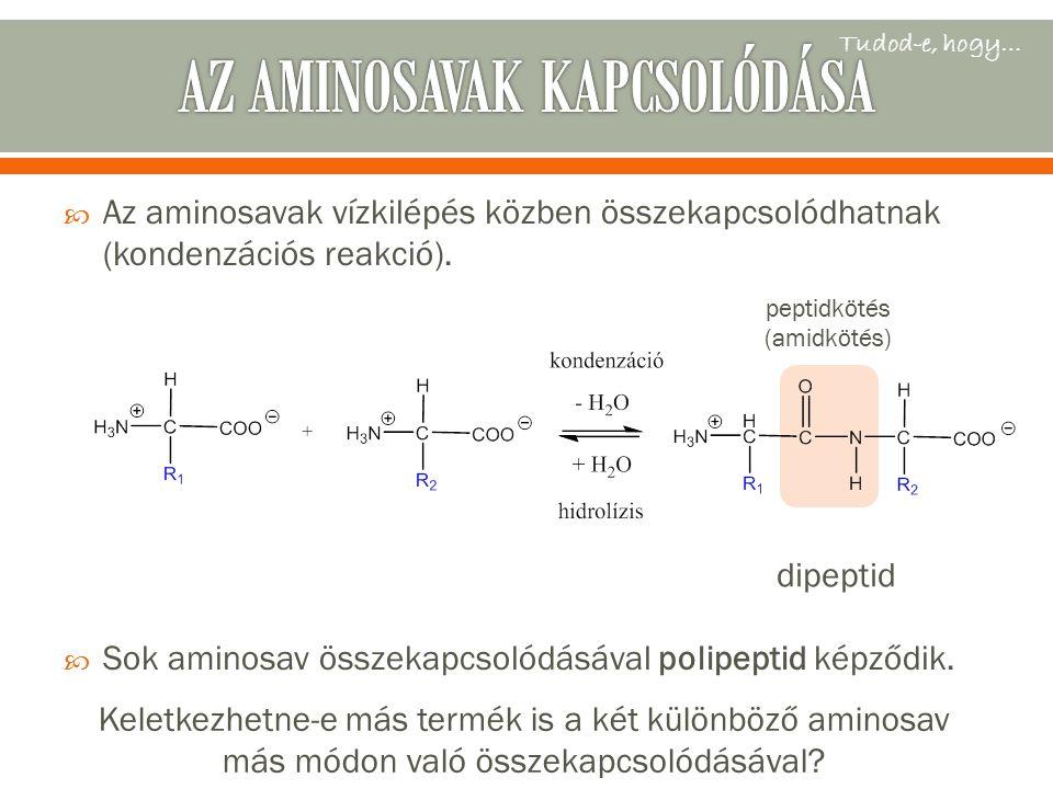 Az aminosavak vízkilépés közben összekapcsolódhatnak (kondenzációs reakció).