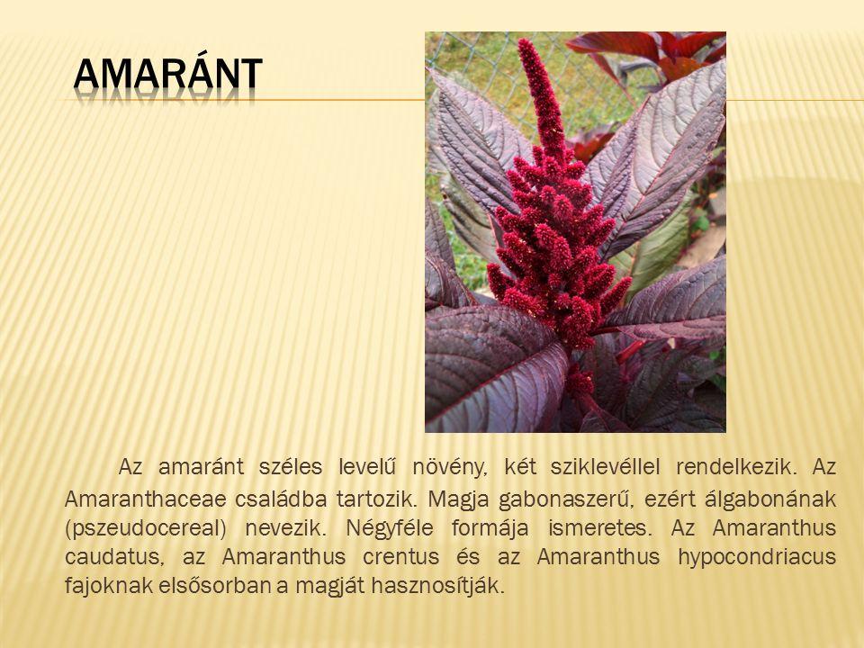 Az amaránt széles levelű növény, két sziklevéllel rendelkezik. Az Amaranthaceae családba tartozik. Magja gabonaszerű, ezért álgabonának (pszeudocereal