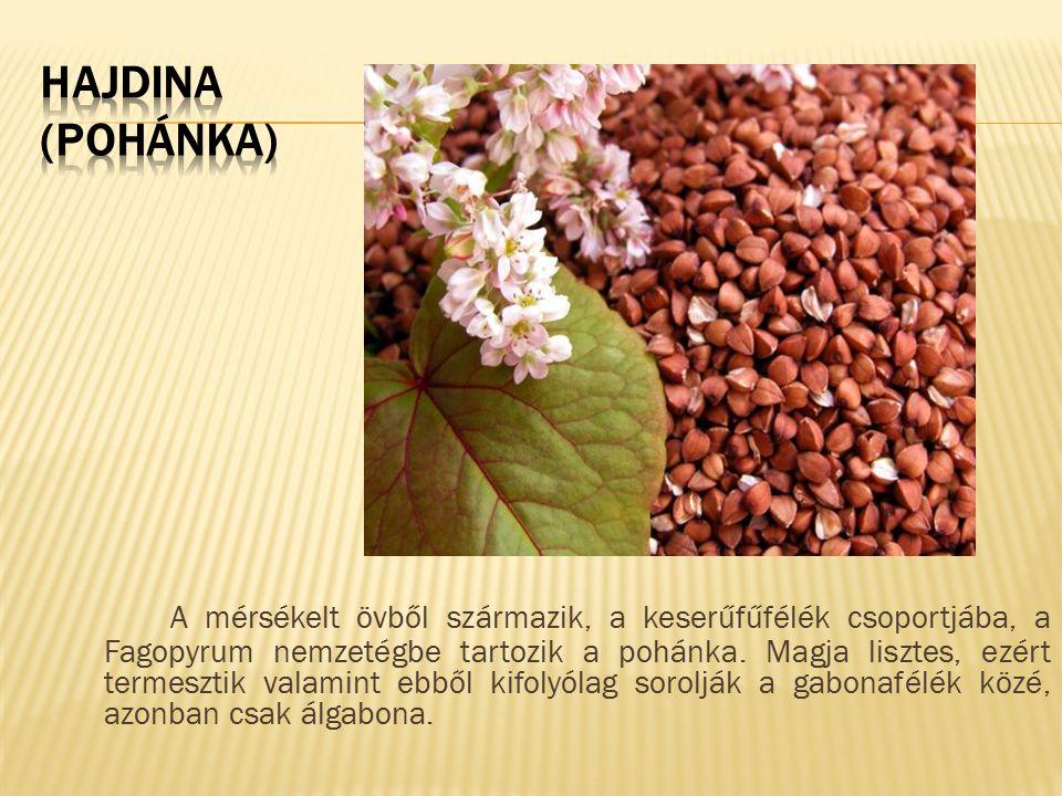 A mérsékelt övből származik, a keserűfűfélék csoportjába, a Fagopyrum nemzetégbe tartozik a pohánka. Magja lisztes, ezért termesztik valamint ebből ki