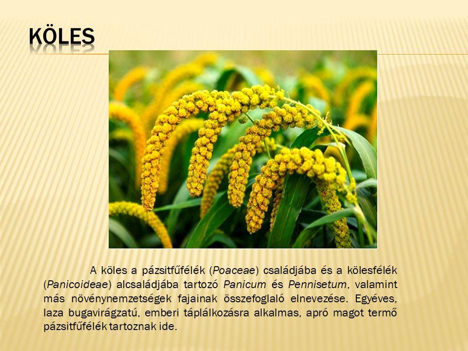 A köles a pázsitfűfélék (Poaceae) családjába és a kölesfélék (Panicoideae) alcsaládjába tartozó Panicum és Pennisetum, valamint más növénynemzetségek