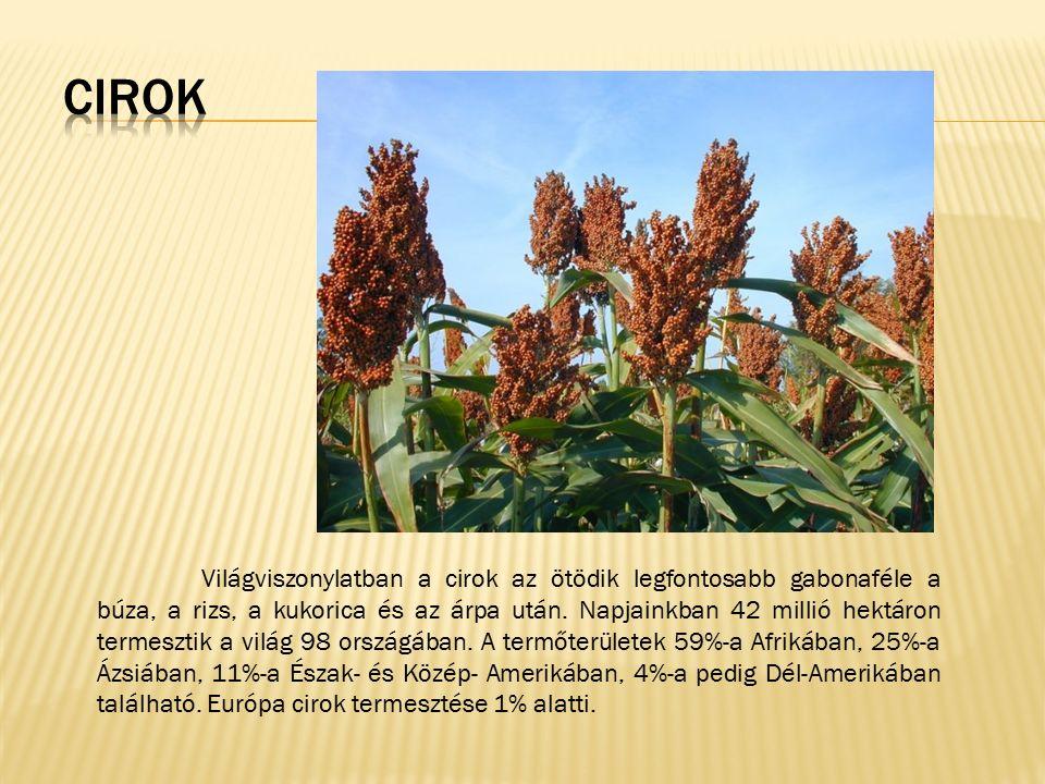 Világviszonylatban a cirok az ötödik legfontosabb gabonaféle a búza, a rizs, a kukorica és az árpa után. Napjainkban 42 millió hektáron termesztik a v