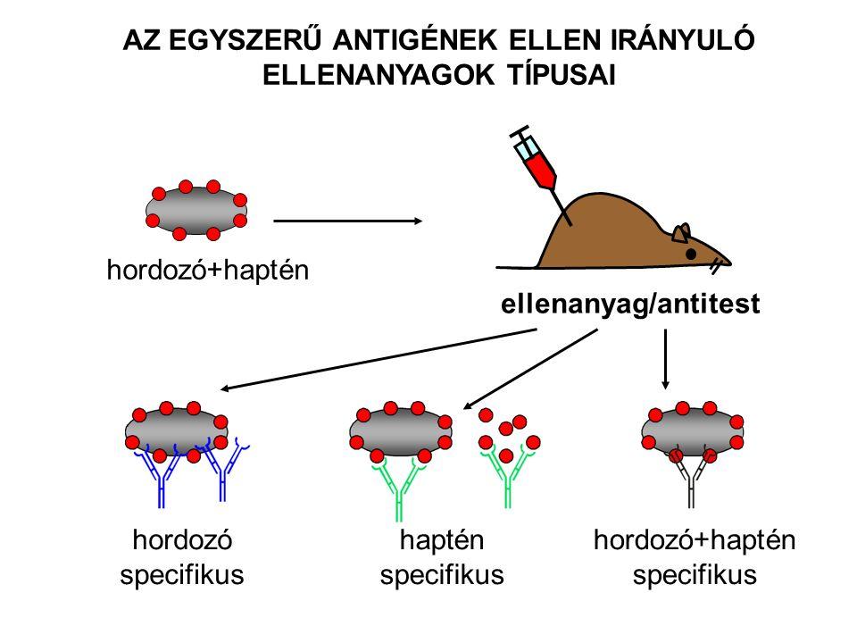 hordozó specifikus haptén specifikus hordozó+haptén specifikus hordozó+haptén ellenanyag/antitest AZ EGYSZERŰ ANTIGÉNEK ELLEN IRÁNYULÓ ELLENANYAGOK TÍPUSAI