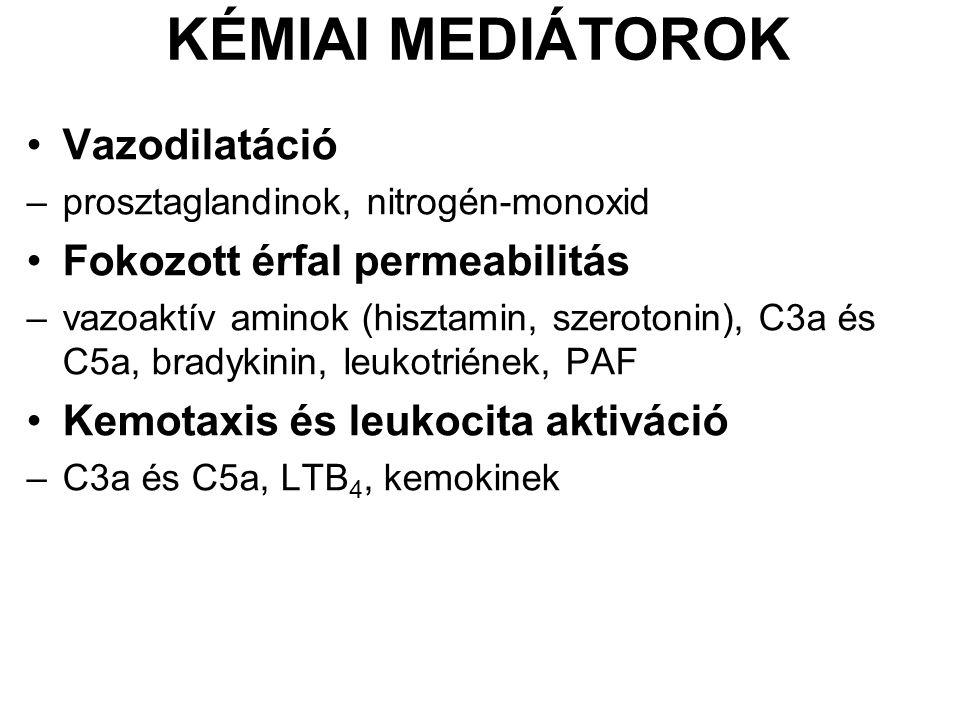 KÉMIAI MEDIÁTOROK Vazodilatáció –prosztaglandinok, nitrogén-monoxid Fokozott érfal permeabilitás –vazoaktív aminok (hisztamin, szerotonin), C3a és C5a, bradykinin, leukotriének, PAF Kemotaxis és leukocita aktiváció –C3a és C5a, LTB 4, kemokinek