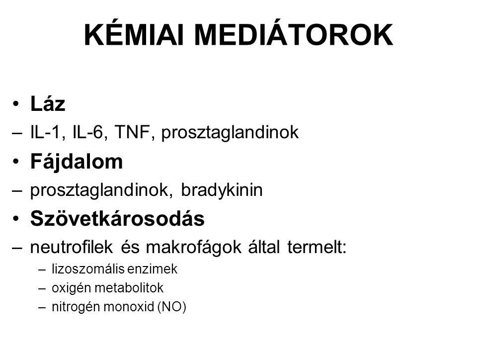KÉMIAI MEDIÁTOROK Láz –IL-1, IL-6, TNF, prosztaglandinok Fájdalom –prosztaglandinok, bradykinin Szövetkárosodás –neutrofilek és makrofágok által termelt: –lizoszomális enzimek –oxigén metabolitok –nitrogén monoxid (NO)
