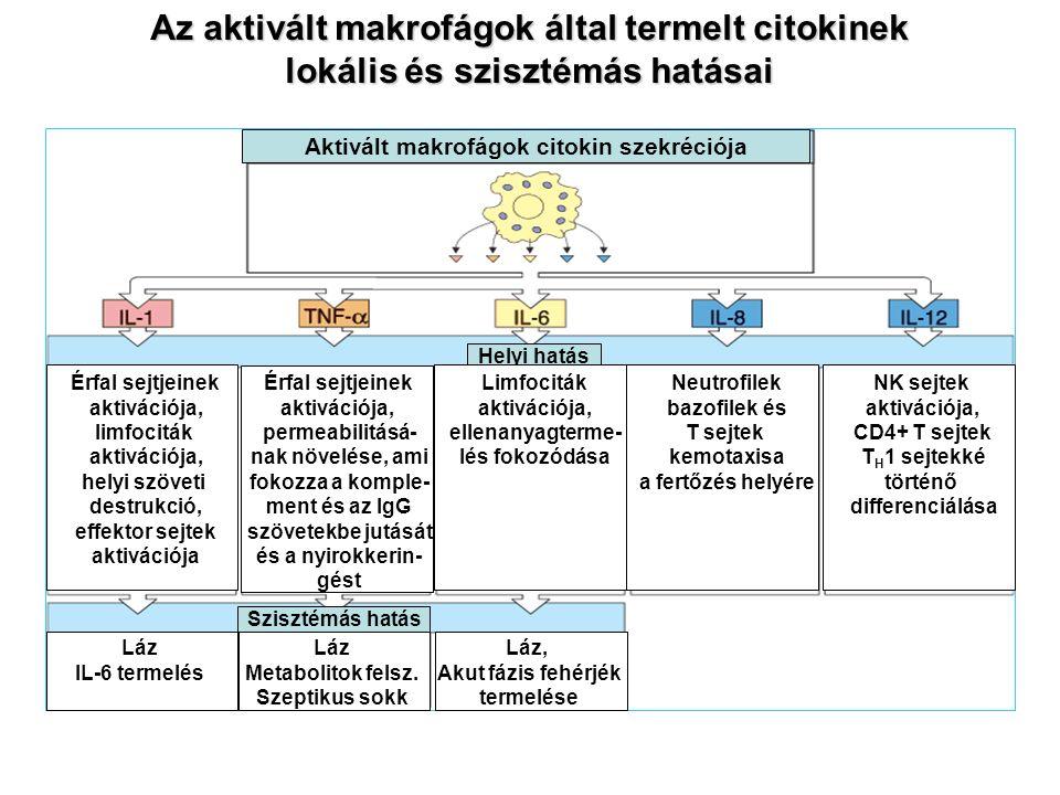 Az aktivált makrofágok által termelt citokinek lokális és szisztémás hatásai Szisztémás hatás Helyi hatás Aktivált makrofágok citokin szekréciója Láz Metabolitok felsz.
