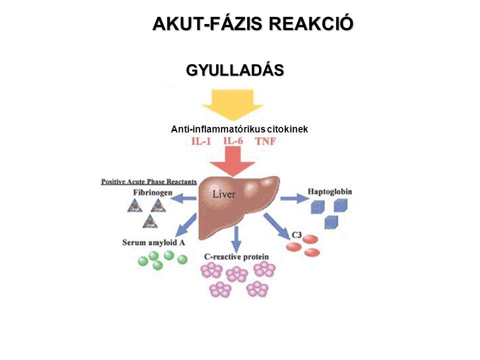 GYULLADÁS Anti-inflammatórikus citokinek