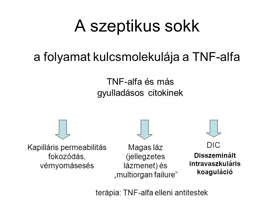 """A szeptikus sokk a folyamat kulcsmolekulája a TNF-alfa TNF-alfa és más gyulladásos citokinek Kapilláris permeabilitás fokozódás, vérnyomásesés DIC Magas láz (jellegzetes lázmenet) és """"multiorgan failure terápia: TNF-alfa elleni antitestek Disszeminált intravaszkuláris koaguláció"""