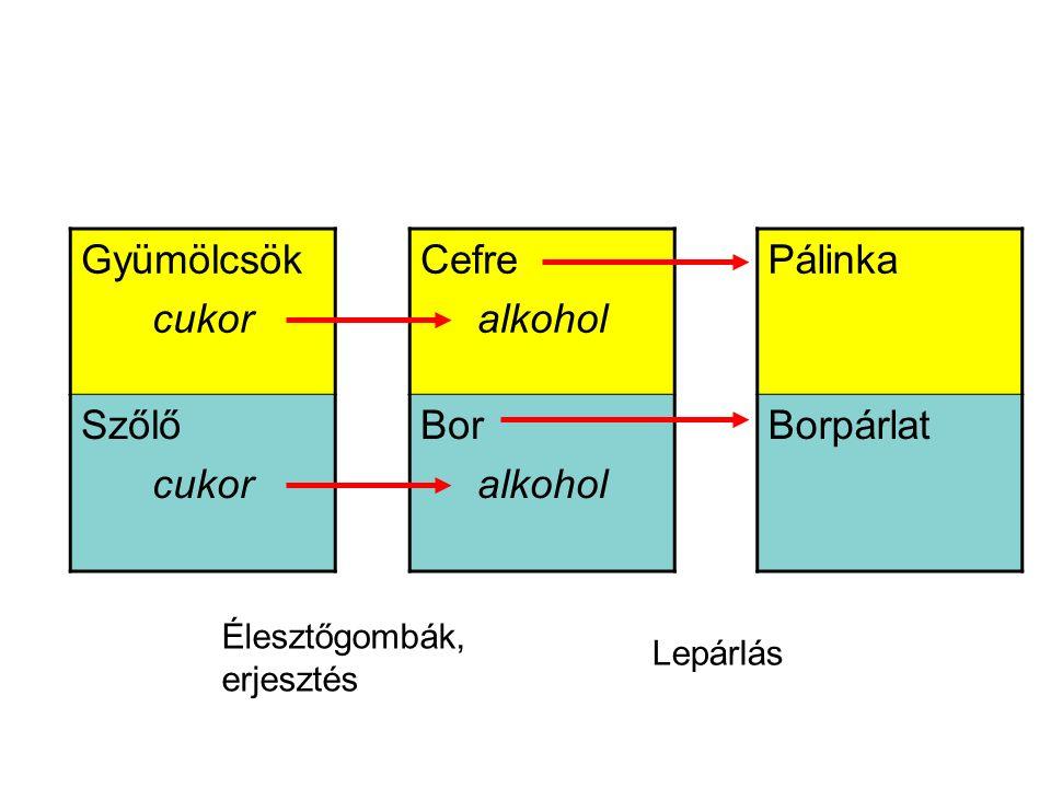 Gyümölcsök cukor Szőlő cukor Cefre alkohol Bor alkohol Pálinka Borpárlat Élesztőgombák, erjesztés Lepárlás