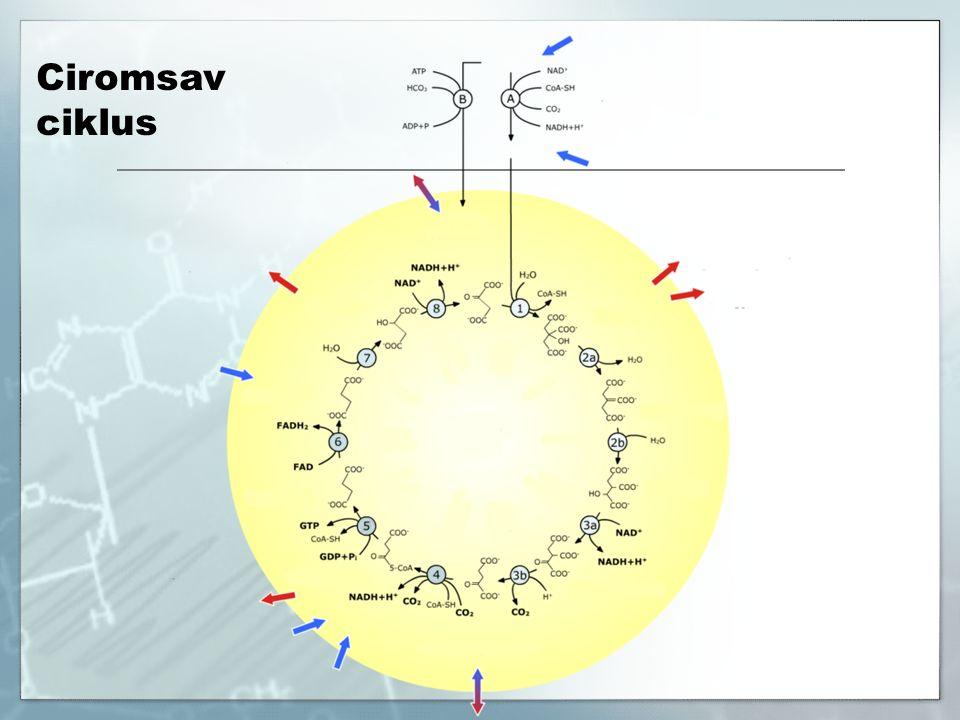 Ciromsav ciklus