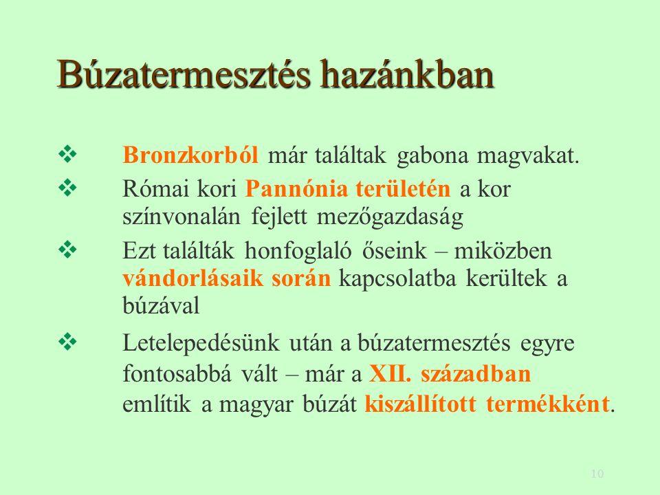 10 Búzatermesztés hazánkban  Bronzkorból már találtak gabona magvakat.  Római kori Pannónia területén a kor színvonalán fejlett mezőgazdaság  Ezt t