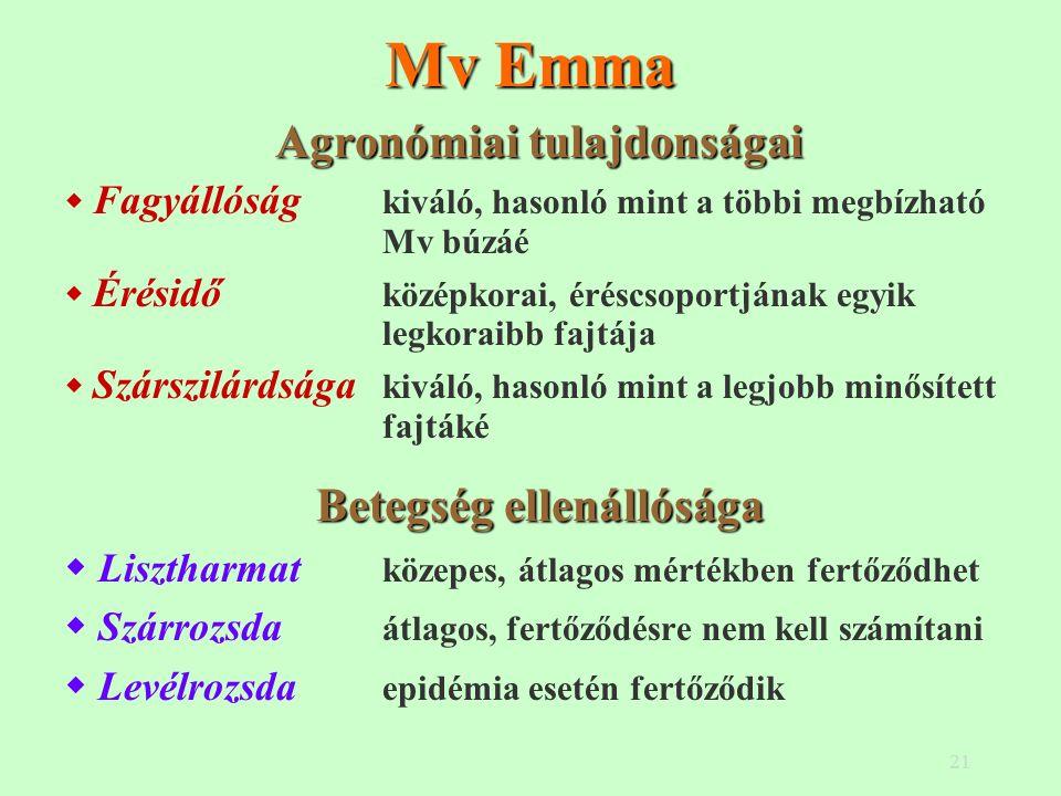 21 Mv Emma Agronómiai tulajdonságai  Fagyállóság kiváló, hasonló mint a többi megbízható Mv búzáé  Érésidő középkorai, éréscsoportjának egyik legkoraibb fajtája  Szárszilárdsága kiváló, hasonló mint a legjobb minősített fajtáké Betegség ellenállósága  Lisztharmat közepes, átlagos mértékben fertőződhet  Szárrozsda átlagos, fertőződésre nem kell számítani  Levélrozsda epidémia esetén fertőződik