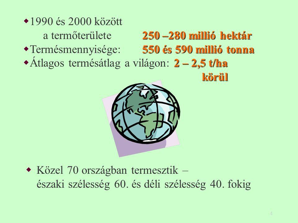 4  Közel 70 országban termesztik – északi szélesség 60. és déli szélesség 40. fokig 250 –280 millió hektár  1990 és 2000 között a termőterülete 250