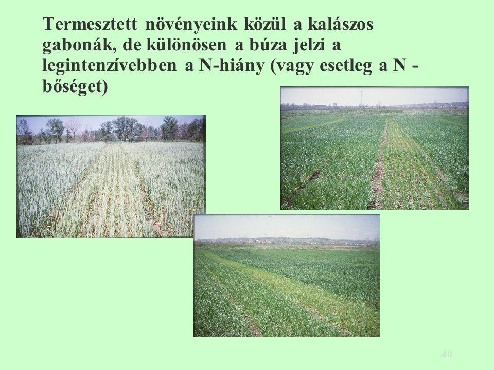 40 Termesztett növényeink közül a kalászos gabonák, de különösen a búza jelzi a legintenzívebben a N-hiány (vagy esetleg a N - bőséget)