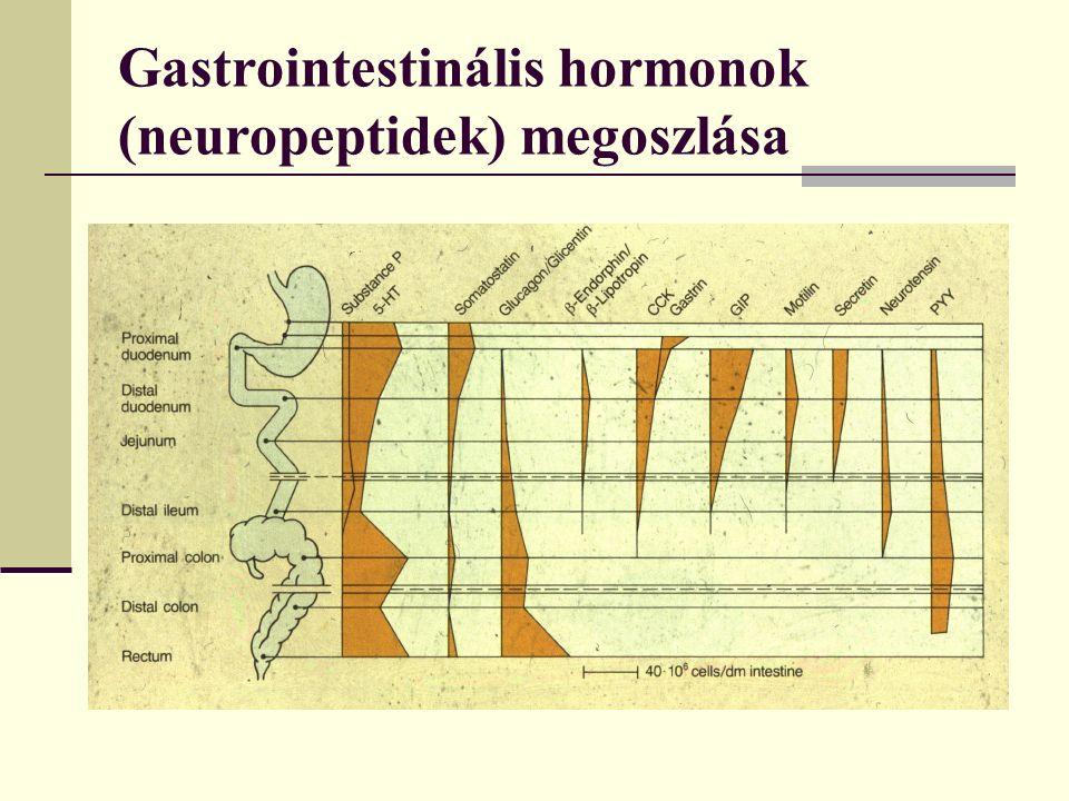 Gastrointestinális hormonok (neuropeptidek) megoszlása