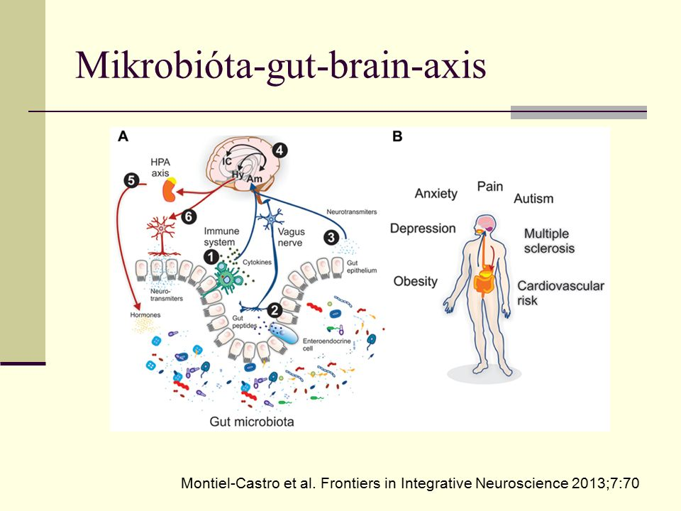 Mikrobióta-gut-brain-axis Montiel-Castro et al. Frontiers in Integrative Neuroscience 2013;7:70