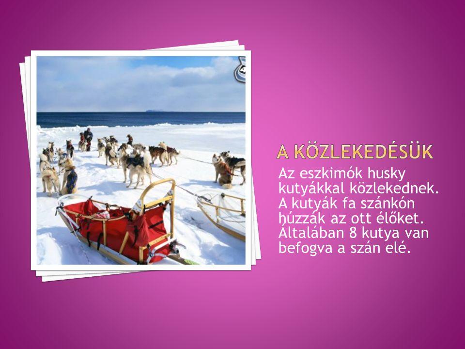 Az eszkimók husky kutyákkal közlekednek. A kutyák fa szánkón húzzák az ott élőket.