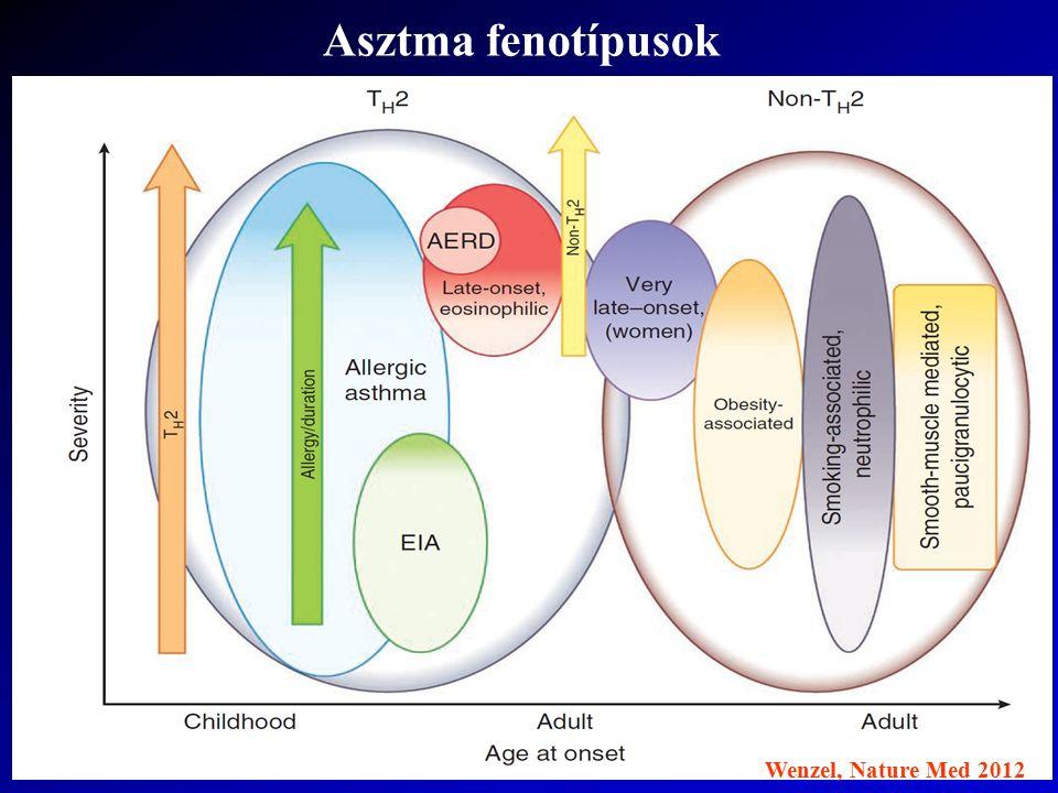 Asztma fenotípusok Wenzel, Nature Med 2012