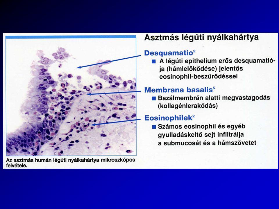 Házipor atka (Dermatophagoides pteronyssimus)