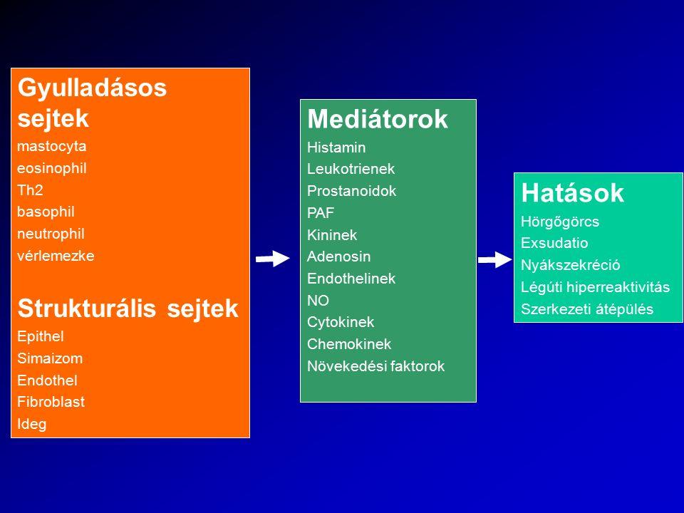 Gyulladásos sejtek mastocyta eosinophil Th2 basophil neutrophil vérlemezke Strukturális sejtek Epithel Simaizom Endothel Fibroblast Ideg Mediátorok Hi