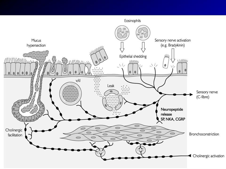 Asztma gyulladás és immunológia