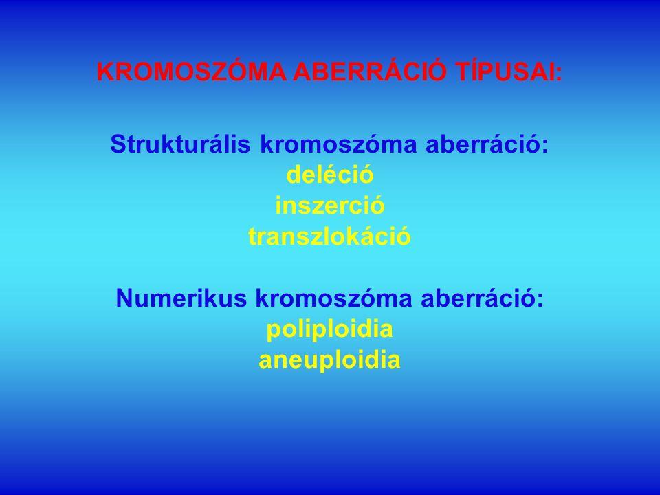 KROMOSZÓMA ABERRÁCIÓ TÍPUSAI: Strukturális kromoszóma aberráció: deléció inszerció transzlokáció Numerikus kromoszóma aberráció: poliploidia aneuploidia