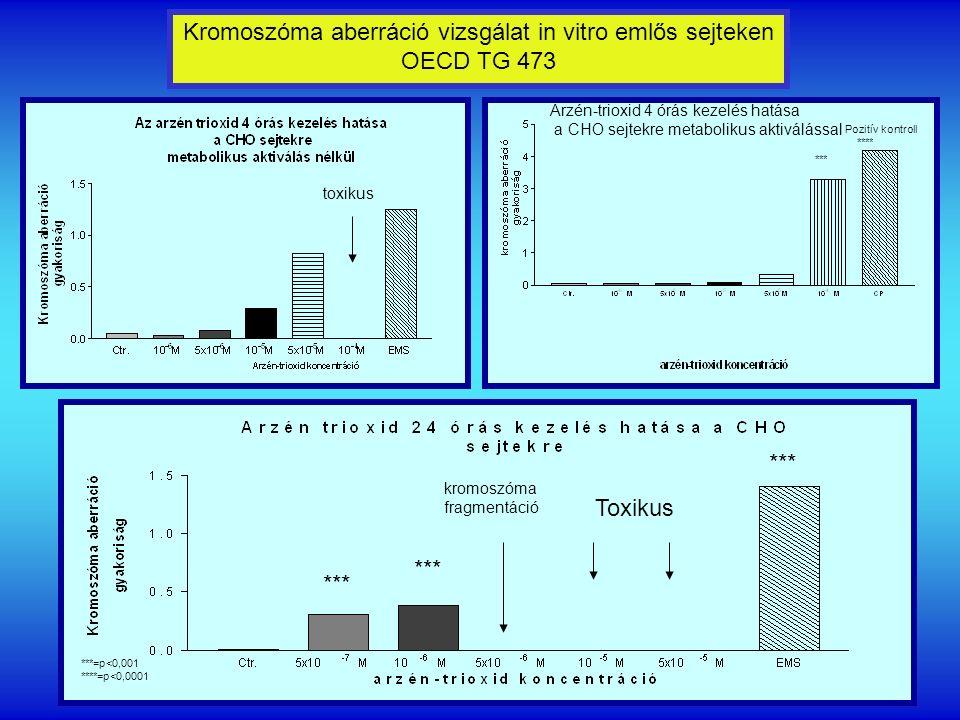 Arzén-trioxid 4 órás kezelés hatása a CHO sejtekre metabolikus aktiválással *** Toxikus kromoszóma fragmentáció ***=p<0,001 ****=p<0,0001 Kromoszóma aberráció vizsgálat in vitro emlős sejteken OECD TG 473 Pozitív kontroll **** *** toxikus