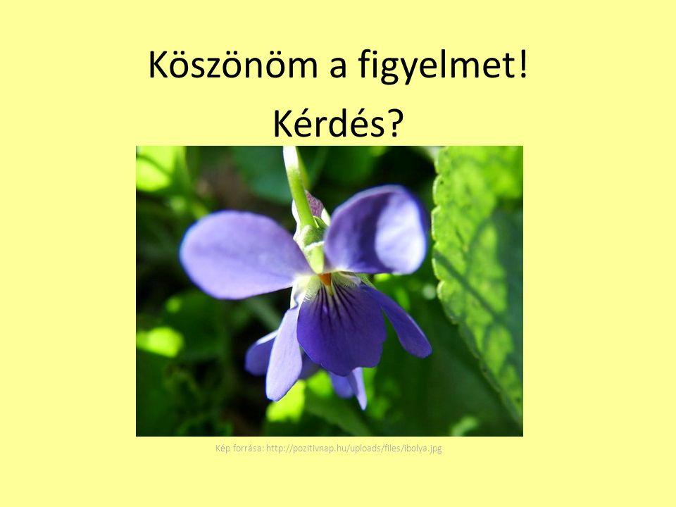 Köszönöm a figyelmet! Kérdés? Kép forrása: http://pozitivnap.hu/uploads/files/ibolya.jpg