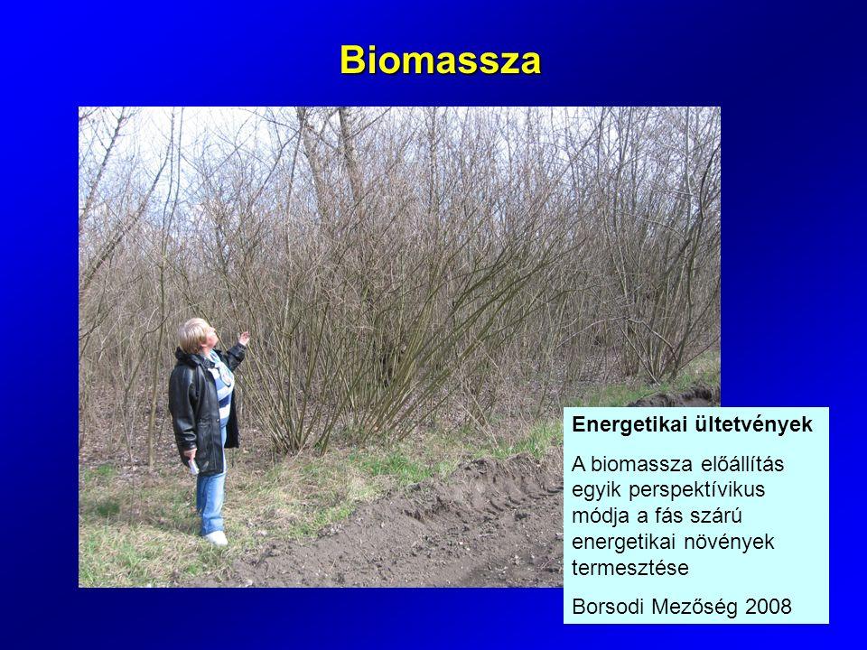 Energetikai ültetvények A biomassza előállítás egyik perspektívikus módja a fás szárú energetikai növények termesztése Borsodi Mezőség 2008 Biomassza