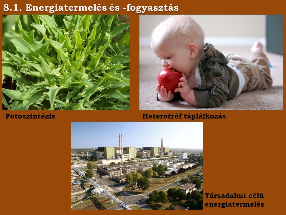 8.1. Energiatermelés és -fogyasztás FotoszintézisHeterotróf táplálkozás Társadalmi célú energiatermelés