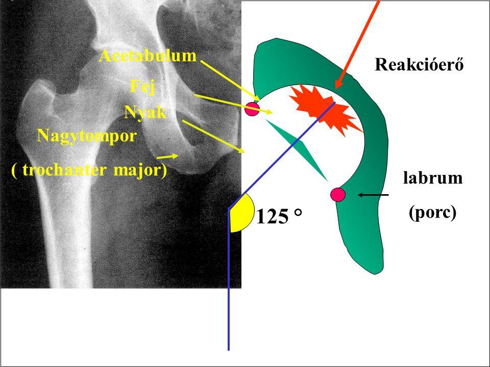 Transverse stability of the pelvis