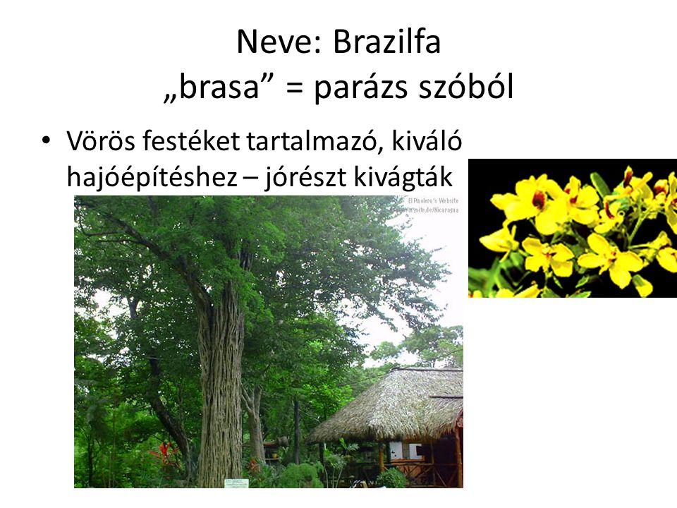 """Neve: Brazilfa """"brasa = parázs szóból Vörös festéket tartalmazó, kiváló hajóépítéshez – jórészt kivágták"""