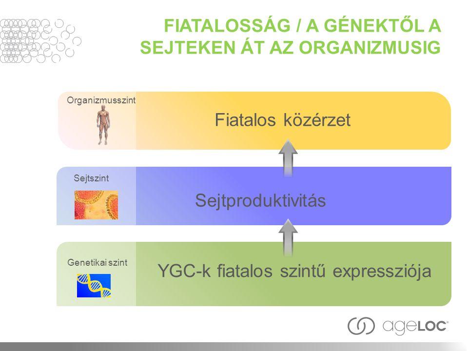 Organizmusszint Genetikai szint Sejtszint Fiatalos közérzet Sejtproduktivitás YGC-k fiatalos szintű expressziója FIATALOSSÁG / A GÉNEKTŐL A SEJTEKEN ÁT AZ ORGANIZMUSIG