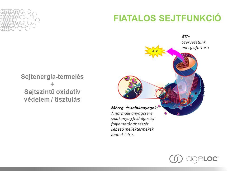 FIATALOS SEJTFUNKCIÓ Sejtenergia-termelés + Sejtszintű oxidatív védelem / tisztulás ATP Méreg- és salakanyagok: A normális anyagcsere salakanyag feldolgozási folyamatának részét képező melléktermékek jönnek létre.