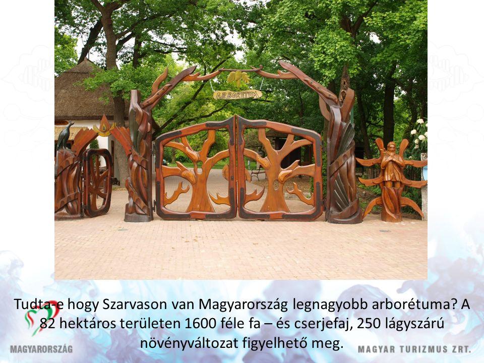 Tudta-e hogy Szarvason van Magyarország legnagyobb arborétuma.