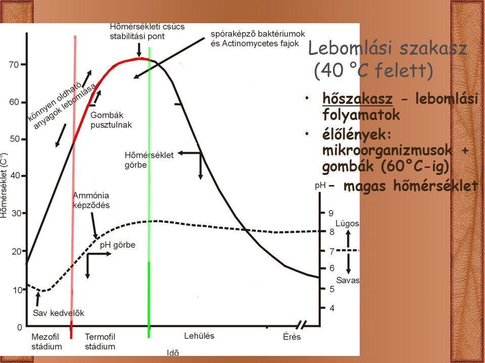 Lebomlási szakasz (40 °C felett) hőszakasz - lebomlási folyamatok élőlények: mikroorganizmusok + gombák (60°C-ig) –magas hőmérséklet