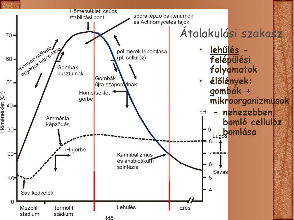 Átalakulási szakasz lehűlés - felépülési folyamatok élőlények: gombák + mikroorganizmusok –nehezebben bomló cellulóz bomlása