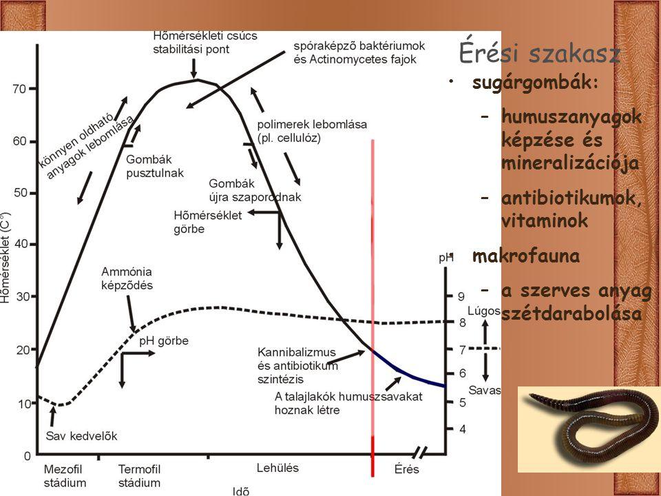 Érési szakasz sugárgombák: –humuszanyagok képzése és mineralizációja –antibiotikumok, vitaminok makrofauna –a szerves anyag szétdarabolása