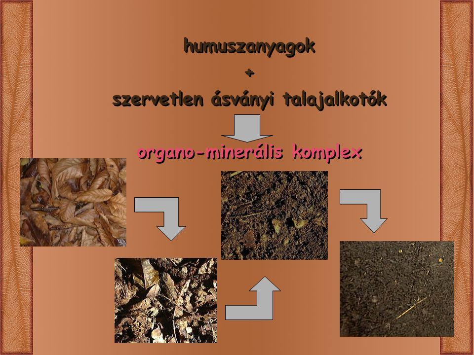 + szervetlen ásványi talajalkotók organo-minerális komplex humuszanyagok + szervetlen ásványi talajalkotók organo-minerális komplex