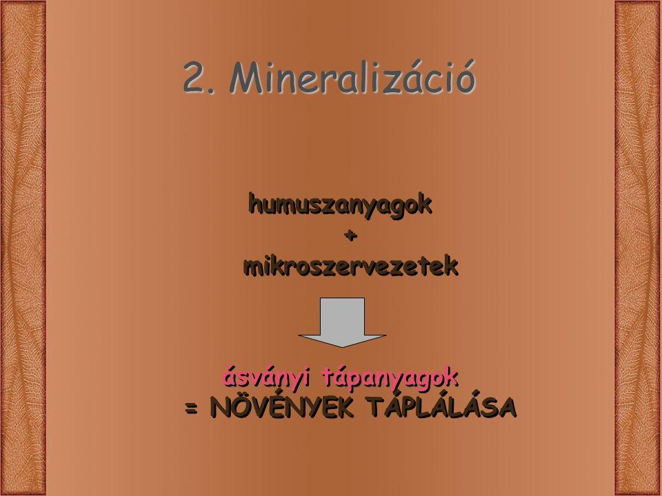 2. Mineralizáció humuszanyagok + mikroszervezetek ásványi tápanyagok = NÖVÉNYEK TÁPLÁLÁSA humuszanyagok + mikroszervezetek ásványi tápanyagok = NÖVÉNY