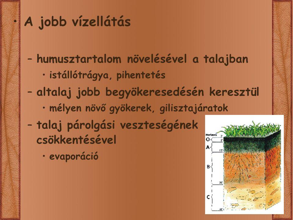 A jobb vízellátás –humusztartalom növelésével a talajban istállótrágya, pihentetés –altalaj jobb begyökeresedésén keresztül mélyen növő gyökerek, gilisztajáratok –talaj párolgási veszteségének csökkentésével evaporáció
