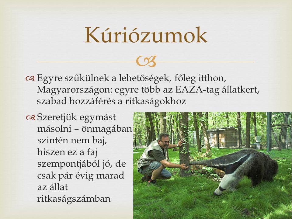   Egyre szűkülnek a lehetőségek, főleg itthon, Magyarországon: egyre több az EAZA-tag állatkert, szabad hozzáférés a ritkaságokhoz Kúriózumok  Szeretjük egymást másolni – önmagában szintén nem baj, hiszen ez a faj szempontjából jó, de csak pár évig marad az állat ritkaságszámban