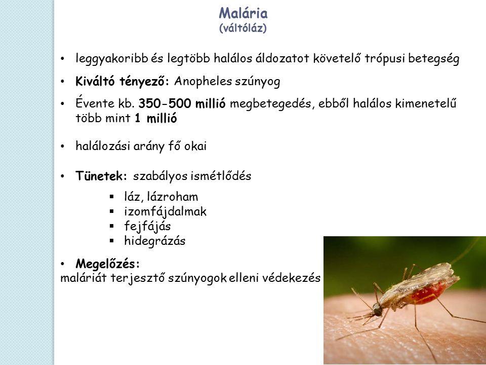 Malária (váltóláz) leggyakoribb és legtöbb halálos áldozatot követelő trópusi betegség Kiváltó tényező: Anopheles szúnyog Évente kb. 350-500 millió me