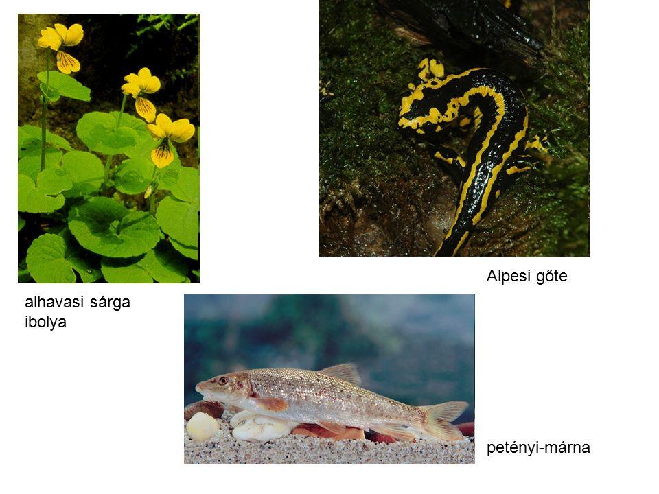Alpesi gőte petényi-márna alhavasi sárga ibolya