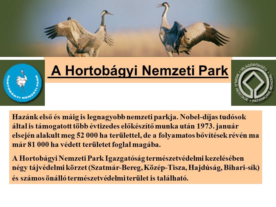 A Hortobágyi Nemzeti Park Hazánk első és máig is legnagyobb nemzeti parkja. Nobel-díjas tudósok által is támogatott több évtizedes előkészítő munka ut