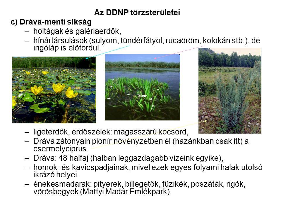 Az DDNP törzsterületei c) Dráva-menti síkság –holtágak és galériaerdők, –hínártársulások (sulyom, tündérfátyol, rucaöröm, kolokán stb.), de ingóláp is