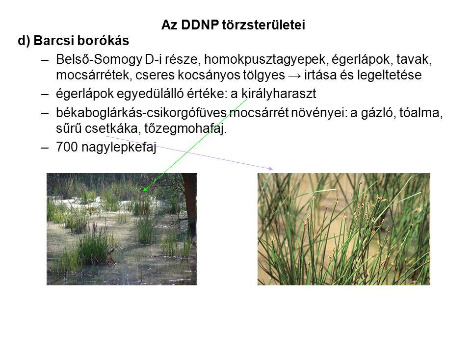 Az DDNP törzsterületei d) Barcsi borókás –Belső-Somogy D-i része, homokpusztagyepek, égerlápok, tavak, mocsárrétek, cseres kocsányos tölgyes → irtása