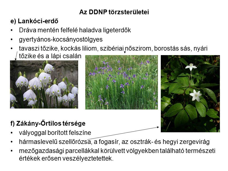 Az DDNP törzsterületei e) Lankóci-erdő Dráva mentén felfelé haladva ligeterdők gyertyános-kocsányostölgyes tavaszi tőzike, kockás liliom, szibériai nő