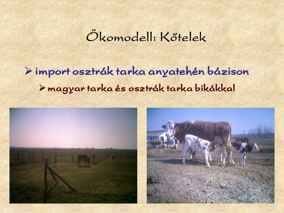 Ökomodell: Kőtelek  import osztrák tarka anyatehén bázison  magyar tarka és osztrák tarka bikákkal  import osztrák tarka anyatehén bázison  magyar tarka és osztrák tarka bikákkal