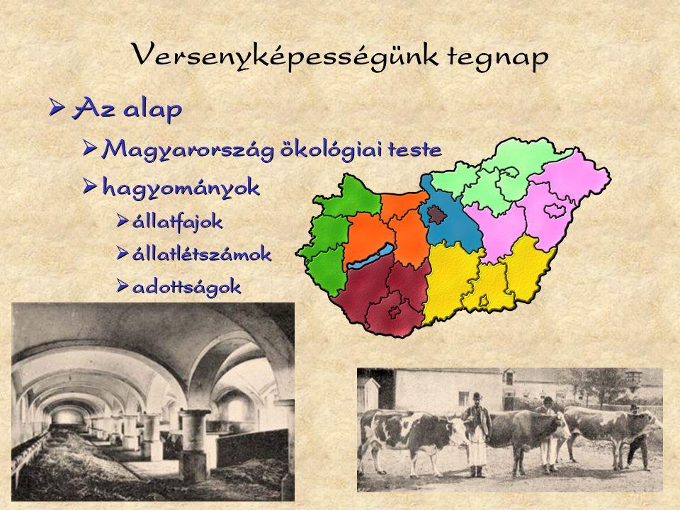 Versenyképességünk tegnap  Az alap  Magyarország ökológiai teste  hagyományok  állatfajok  állatlétszámok  adottságok  Az alap  Magyarország ökológiai teste  hagyományok  állatfajok  állatlétszámok  adottságok