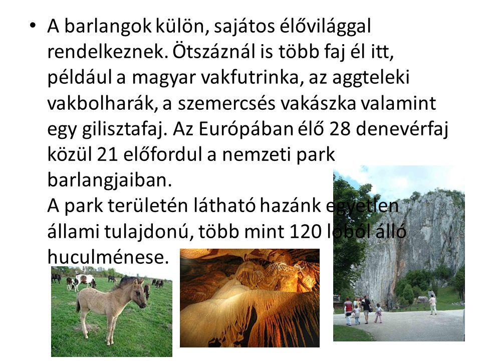 A barlangok külön, sajátos élővilággal rendelkeznek. Ötszáznál is több faj él itt, például a magyar vakfutrinka, az aggteleki vakbolharák, a szemercsé